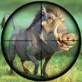 猪打猎射击荒野打猎